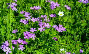 Purple little flowers